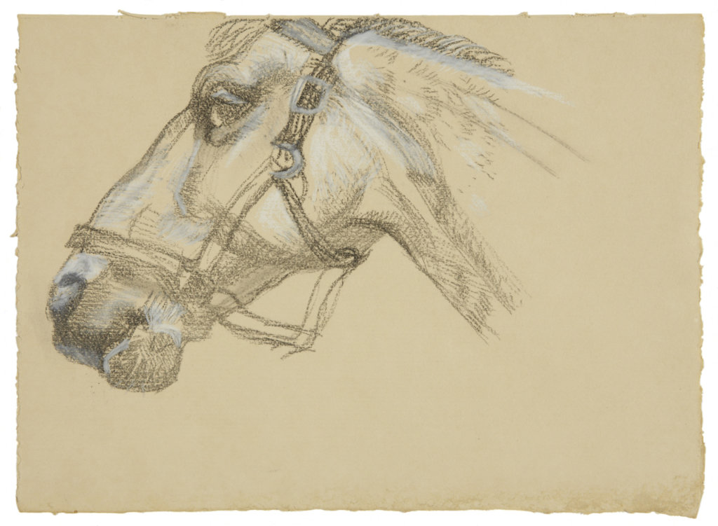 Lucian Freud Head of Success II, 1983 charcoal and crayon on paper 9 1/2 x 13 1/4 in. (24.1 x 33.7 cm.)