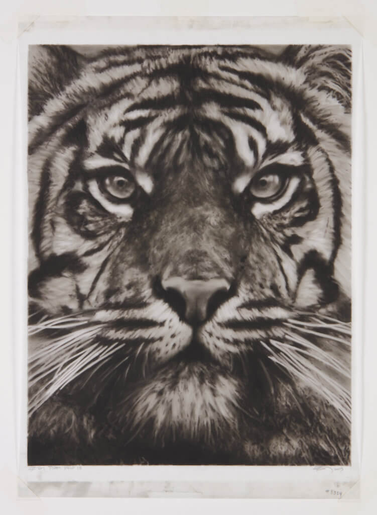 Robert Longo Study of a Tiger Head 18, 2013 ink and charcoal on vellum 20 5/8 x 16 in. (52.4 x 40.6 cm.)